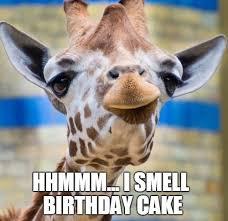 Giraffe Hat Meme - giraffe birthday memes wishesgreeting