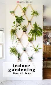 25 best inside garden ideas on pinterest inside plants