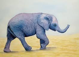 baby elephant needs shadows archive wetcanvas