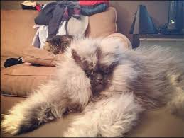 Colonel Meow Memes - colonel meow 14 pleated jeans