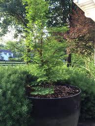 at home in the zen garden abby u0026 elle upstairs fashion u0026 design