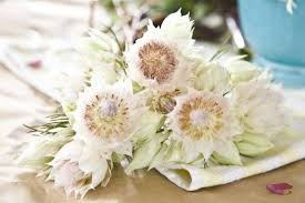 wedding flowers names white wedding flowers names gallery for gt names of white flowers