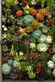 cool succulent wall garden 118 succulent garden wall tile 30083