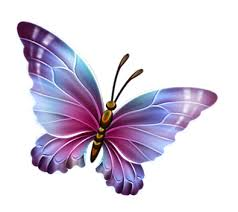 butterfly clipart transparent background pencil and in color no