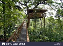 tree house tranquil resort kerala south india india asia