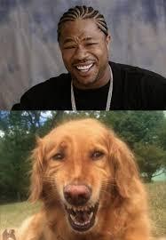 Funny Dog Face Meme - dog doing impression of xzibit s yo dawg meme face funny