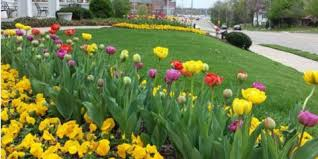 Landscaping Columbia Mo by 4 Ways Columbia U0027s Top Landscape Design Company Can Add Color To