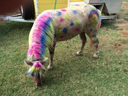Hire boots and bows pony parties pony party in lubbock texas
