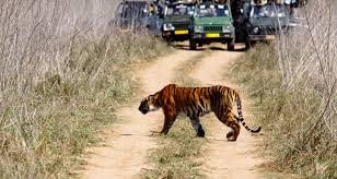 New Jersey wildlife tours images India wildlife tour with temples india wildlife temple tour jpg