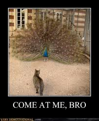 Peacock Meme - come at me bro very demotivational demotivational posters
