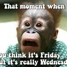 Meme Hump Day - 54 best wednesday memes images on pinterest good morning hump day