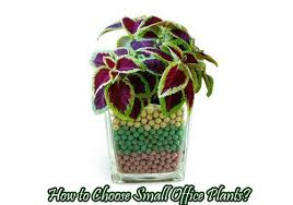 best plant for office small office plants best plants listed office plants