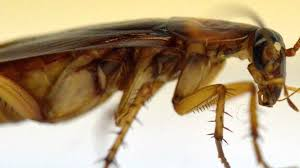 roaches how they get clean youtube