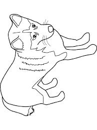coloriage chien bouledogue franã ais