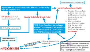 cancer associated macrophage like cells caml u2013 liquid biopsy for