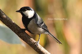 a shutterbug zooms in on birds in chennai u0027s concrete jungle the