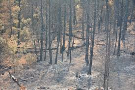 Bc Wildfire Prevention by Opinion Wildfire Issues And Actions Not Cut And Dried Williams