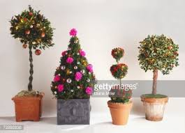 Christmas Tree With Gold Decorations Buxus Tree In Wooden Container Stock Photo Getty Images