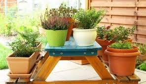 balkon grã npflanzen balkonpflanzen ein blühender balkon im frühling