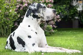 8 breeds of dog prone to developing cancer pets4homes