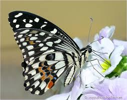butterfly shallow dof