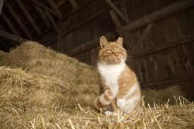 Barn Cat Names Feral Cat Focus Providing Feral Cats With Fundamental Community