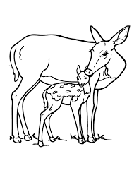 coloring decorative coloring pages deer archives