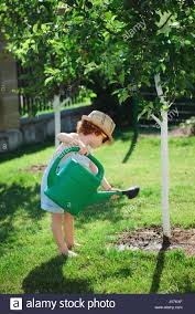 boy watering tree stock photos boy watering tree stock images
