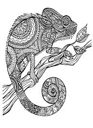 cameleon patterns animals coloring pages for adults justcolor