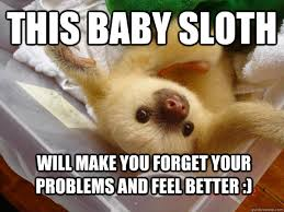 Sloth Meme Jokes - feel better sloth memes quickmeme
