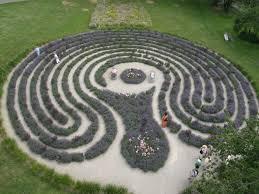 lavender labyrinth shelby mi 28 shelby michigan lavender maze similiar lavender