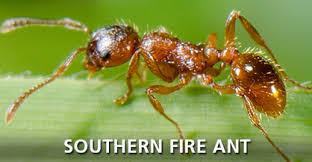 ant id identify type ants southern california corky u0027s