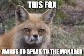 What Did The Fox Say Meme - what does the fox say