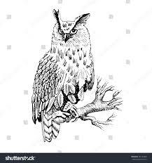 vector owl on branch2 white black stock vector 281159468