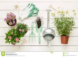 spring gardening tools and flowers in pots on white wood stock