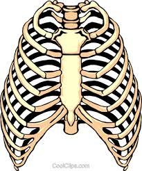 rib cage png transparent images png all