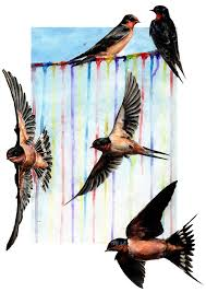 Barn Swallow Tattoo Designs 38 Best Swallows Images On Pinterest Draw Swallows And Bird Art