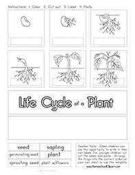plant life cycle worksheet science plants pinterest plant