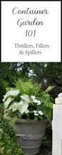 best 25 container gardening ideas on pinterest growing