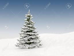 pine tree with snow background stock photo picture