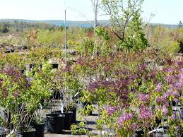 native plant nursery michigan barker creek nursery let our experience work for you michigan us