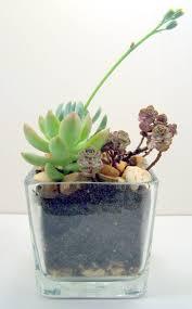 succulent kits planter garden succulent gardening desk terrarium kit best dish