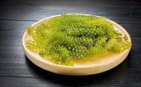 incredibly edible delights 9 edible sea plants activebeat
