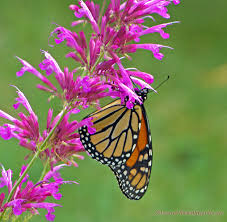 pictures of butterflies and flowers mba degree info