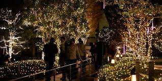 Christmas In Tokyo Holiday Illuminations Go For The Glow Huffpost
