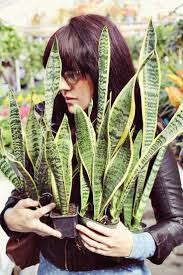 homelife top 15 indoor plants 143 best ღindoor plantsღ images on pinterest indoor gardening
