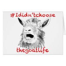 funny goat cards greeting u0026 photo cards zazzle