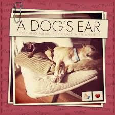 dog photo albums calming for pets gentle songs to relax and calm your