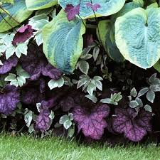 17 images flowers gardens flower bed