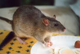 tag dead mice clear the air
